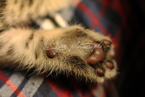 photos animaux2